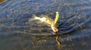 Best Lure Colours for Pike
