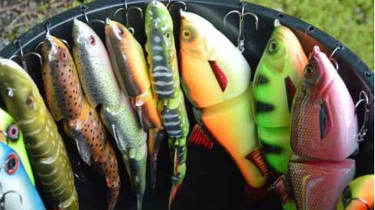 Read more about the article Best Swimbaits for Pike Fishing