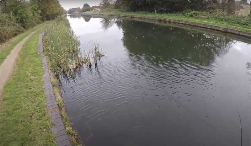 canal lure fishing for pike by bankside foliage