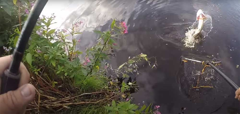 Lure Fishing for Pike on the Canals of the UK
